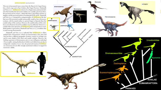 achillesaurus  phylogenetic position