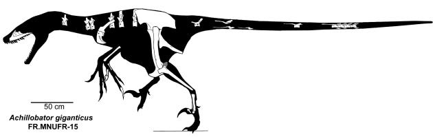 Achillobator_giganticus_skeleton