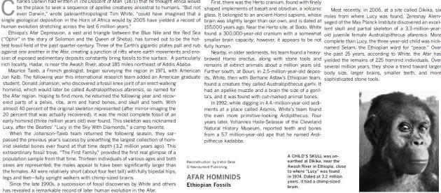 AFAR HOMINIDS