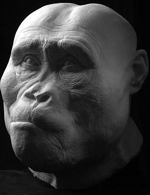 afarensis head reconstruction 1