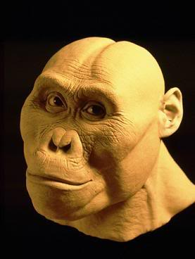 afarensis head reconstruction 3