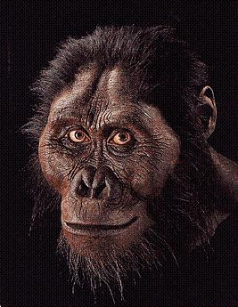 afarensis head reconstruction 4   lucy