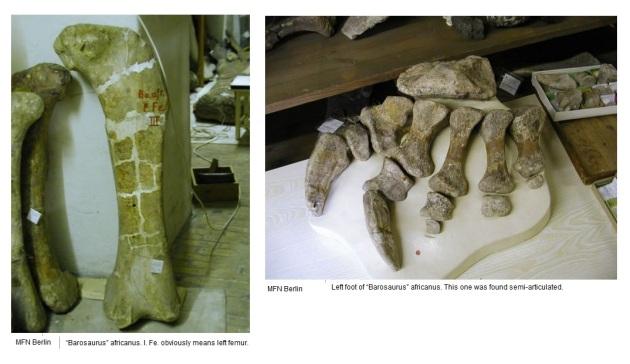 barosaurus africanus