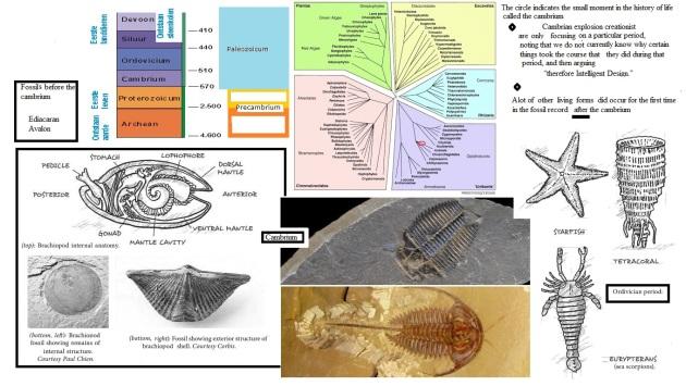 cambrium explosion  creationism