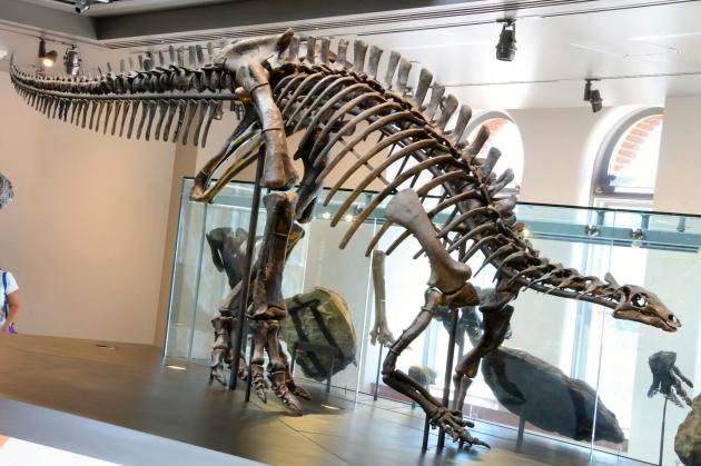 camptosaurus 001