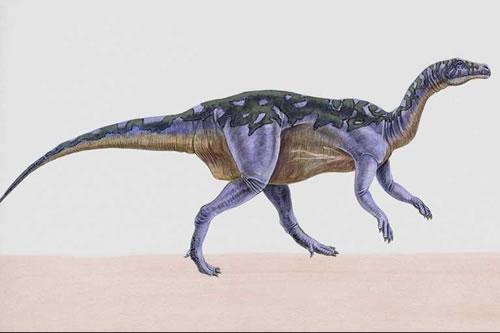 Camptosaurus083