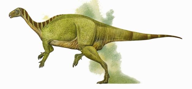 camptosaurus1
