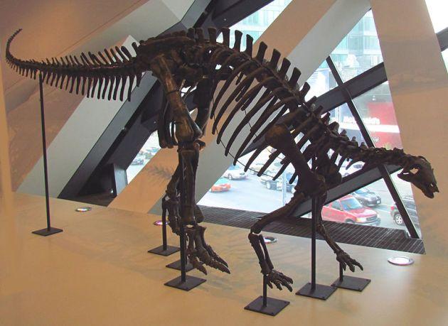 -Camptosaurus,_ROM