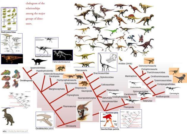 cladogram dino's
