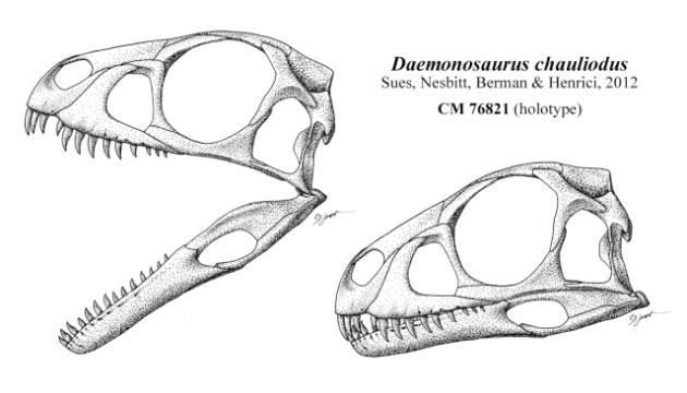 daemonosaurus-chauliodus-skull-sm