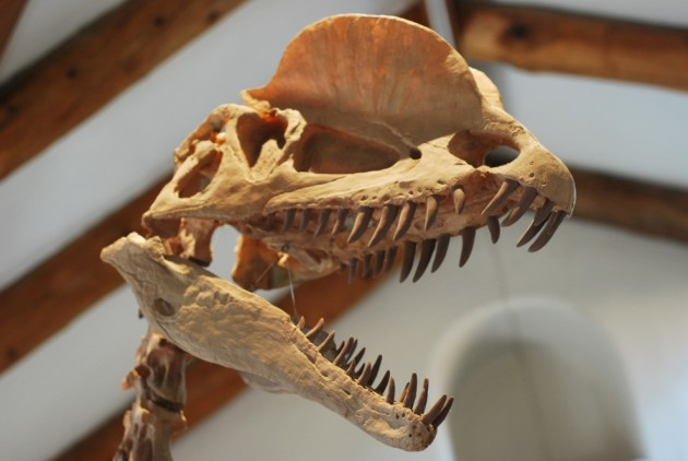 Dilophosaurus-990x664