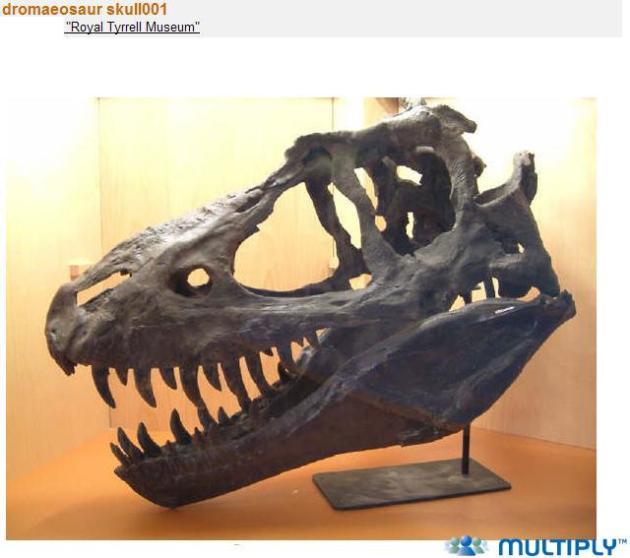 Dromaeosaurus-schedel