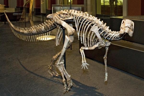 -dysalotosaurus_figure_1