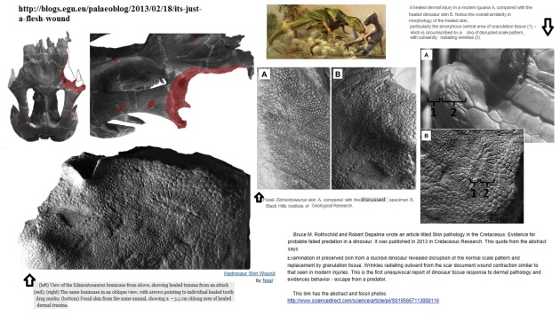 edmondosaurus  (healed) skin