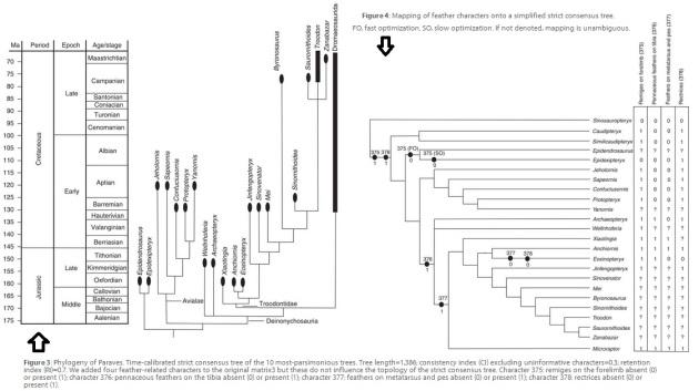 eosino.brevipenna phylogeny