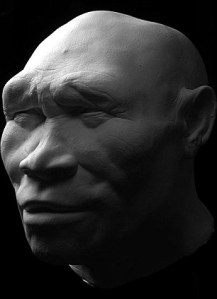 homo erectus sangiran head reconstruction