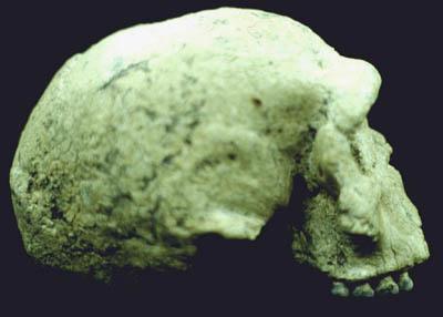 Homo rhodesiensis  broken hill kabwe skull