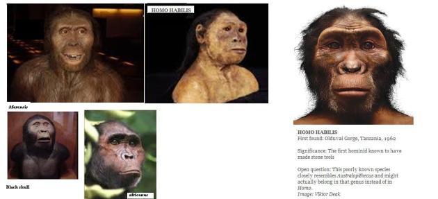 KNM-WT 17000  Black Skull, Australopithecus aethiopicus