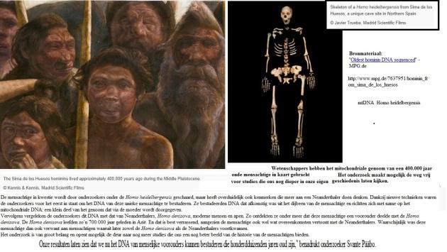mtDNA heidelbergensis