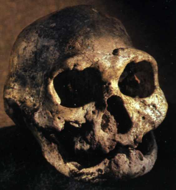 oldmanskull
