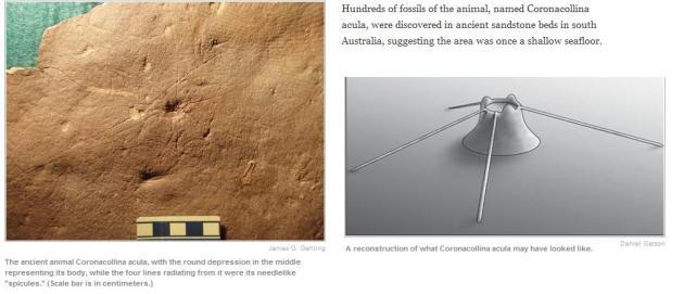 oudste dier met skelet