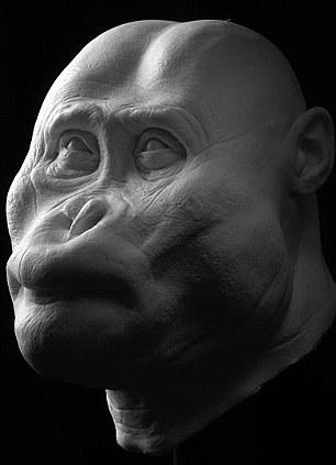 P aethiopicus head reconstruction