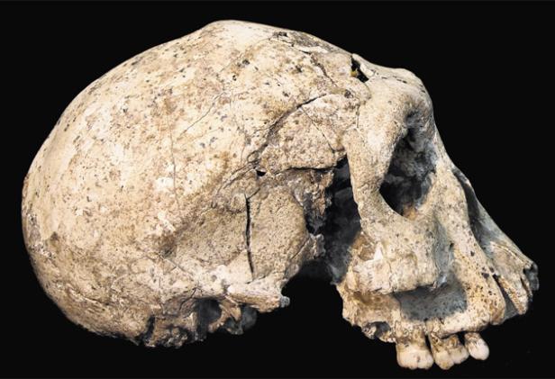 pg-1-skull-240177s