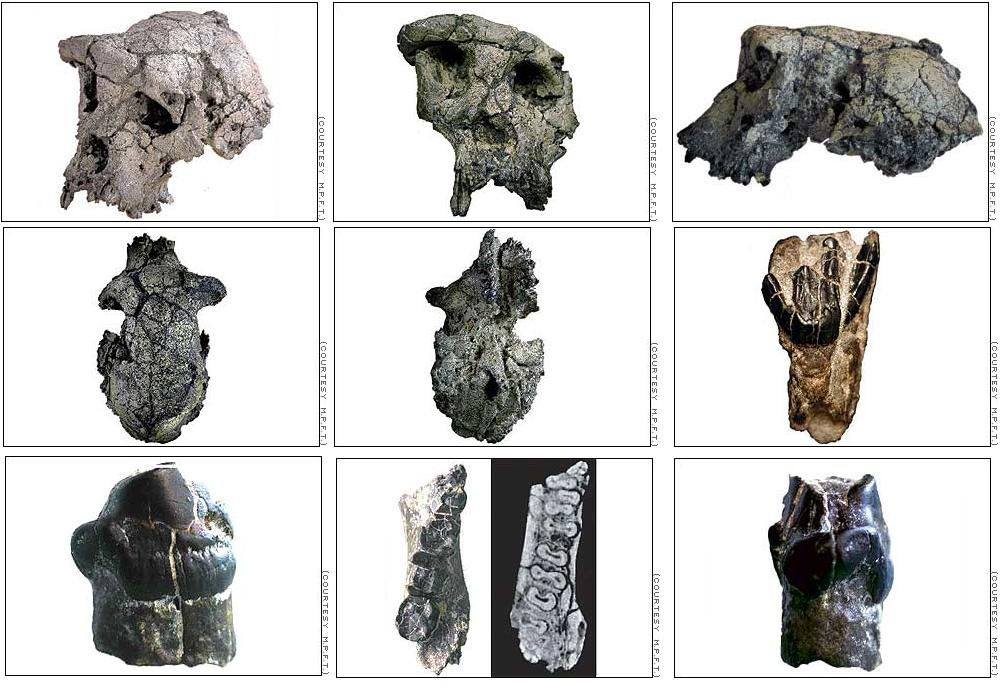Dating fossiele tanden beroemde citaten over online dating