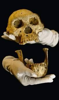 vijfde schedel  5 NWS_20131018_WOR_021_29319286_I1