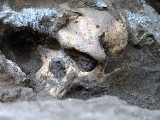 vijfde schedel