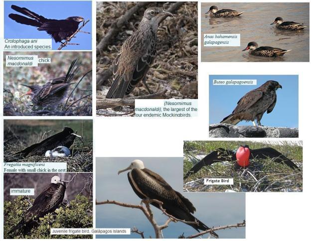 Vogels-II