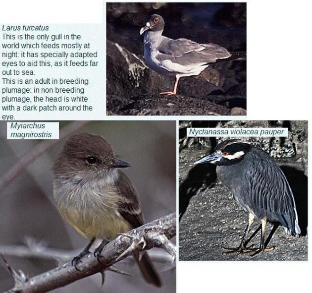 Vogels-III