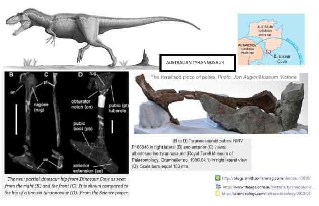 australian tyrannosaur
