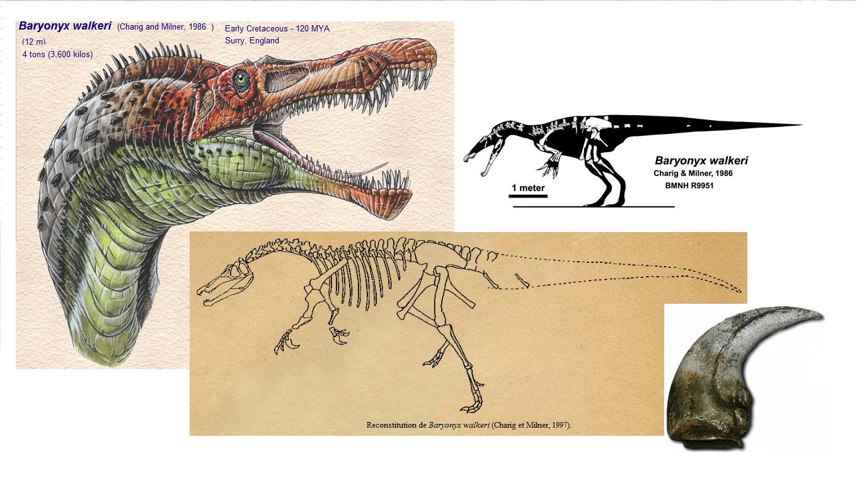 Natuurhistorisch Museum speed dating