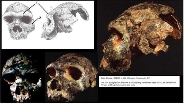 Awash : Bodo skull characteristics