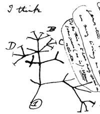 Darwin-Tree-of-Life