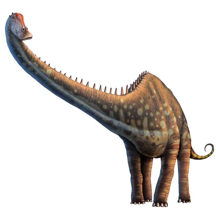 Sauropoda tsjok 39 s blog - Dinosaure diplodocus ...