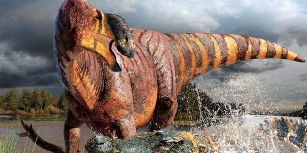 Rhinorex condrupus