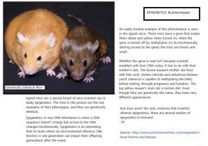 epigenetics and phenotypes