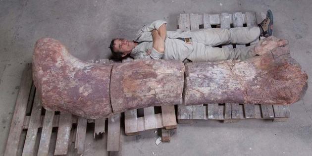 grootste titanosaurus dino 1