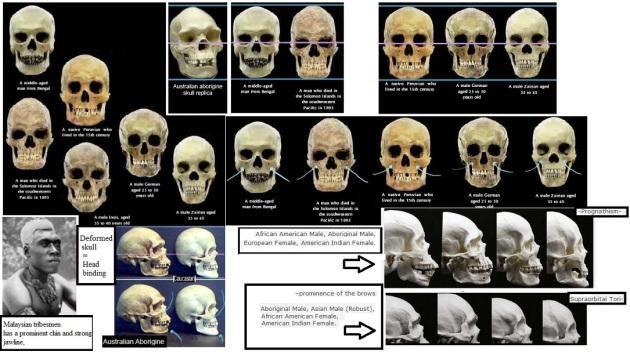 homosapiens skulls