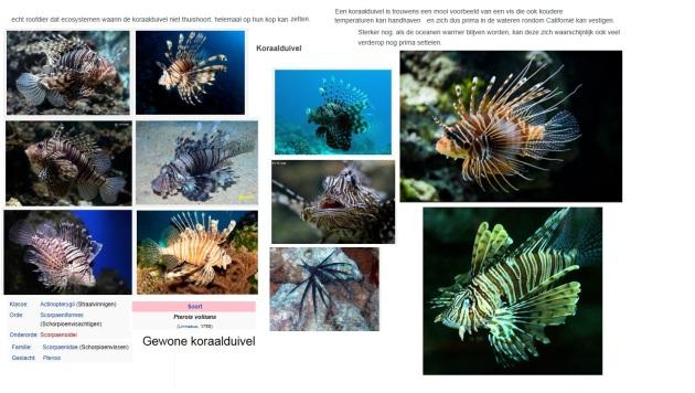 koraalduivel