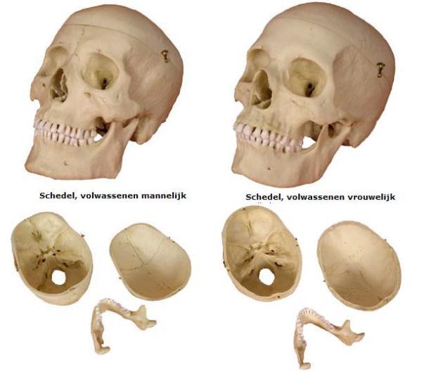 Man vrouw schedel