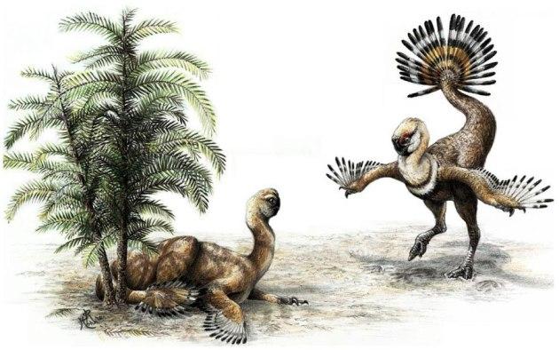 oviraptor  show 537269_454361871283843_1171334315_n