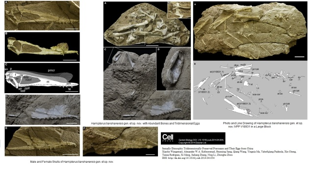Pterosaurs and their  3D  eggs from China