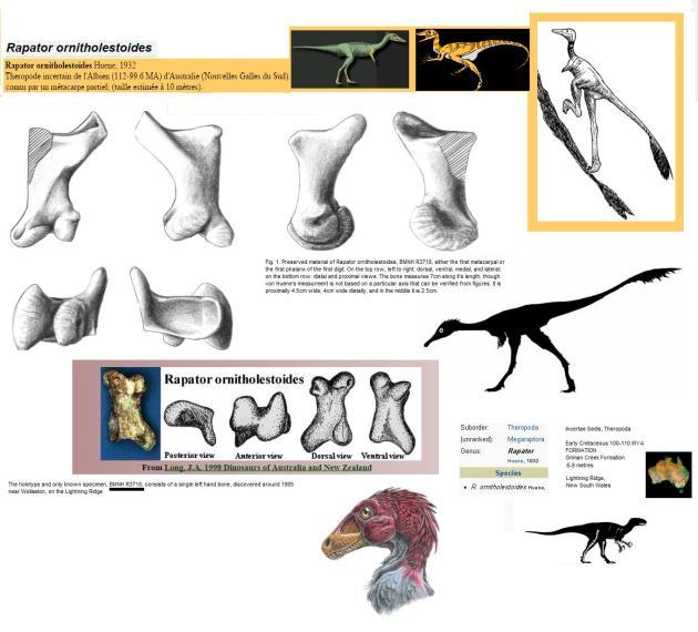 Finger bone fossil /incerta sedis