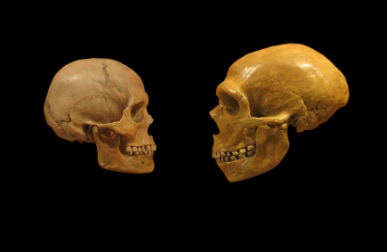 Sapiens_neanderthal_comparison_en_blackbackground