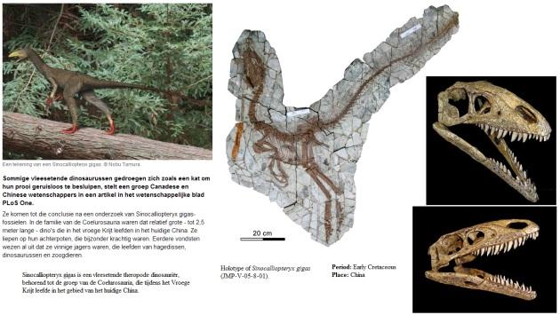 Sinocalliopteryx gigas