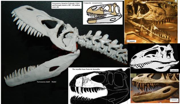 torvosaurus skull reconstructions