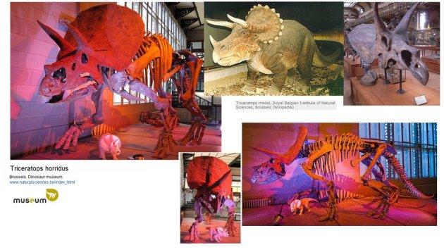 triceratops-horridus-